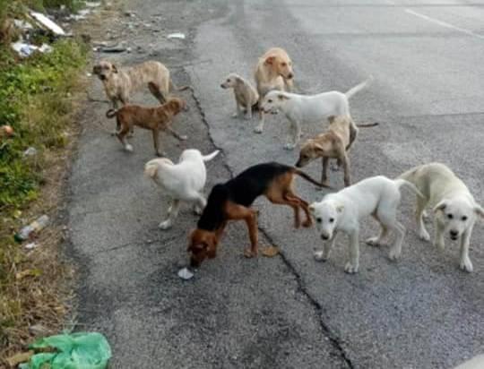 Barile - I cani ed i cuccioli in mezzo alla strada